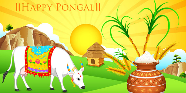 Be captivated with the amazing festive spectacle of Pongal.