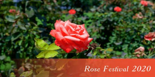 Chandigarh will host Rose Festival from 28 February 2020