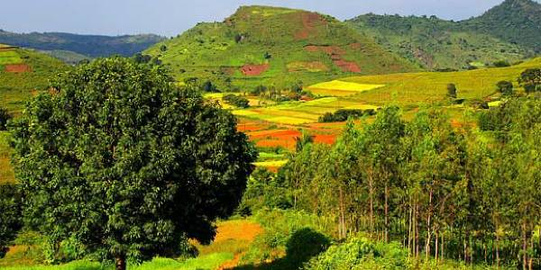 Tour the Araku valley hill station in a tribal way