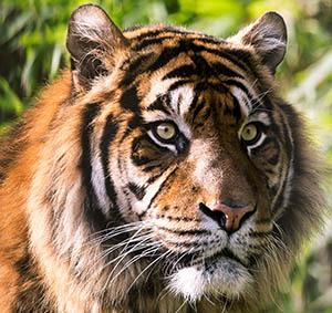 Pakhui Wildlife Sanctuary