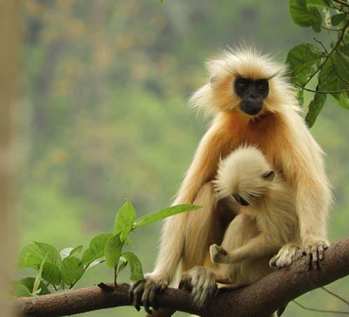 Hoollongapar Gibbon Wildlife Sanctuary