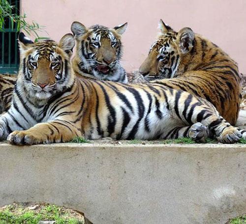 Kanan Pendari Zoo Park