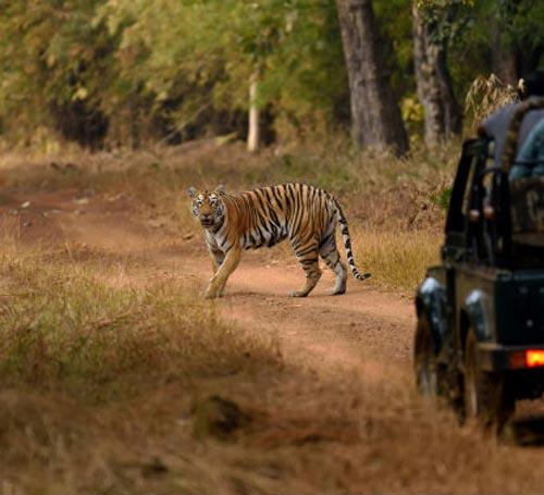 Nandanvan Jungle Safari