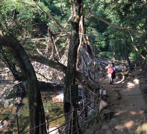 Double Decker Living Root Bridges