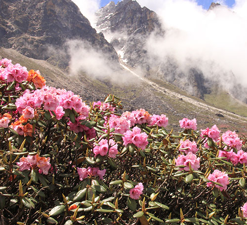 Yumthang Valley of Flowers