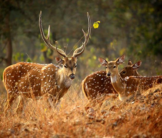 Mudumalai National Park and Wildlife Sanctuary