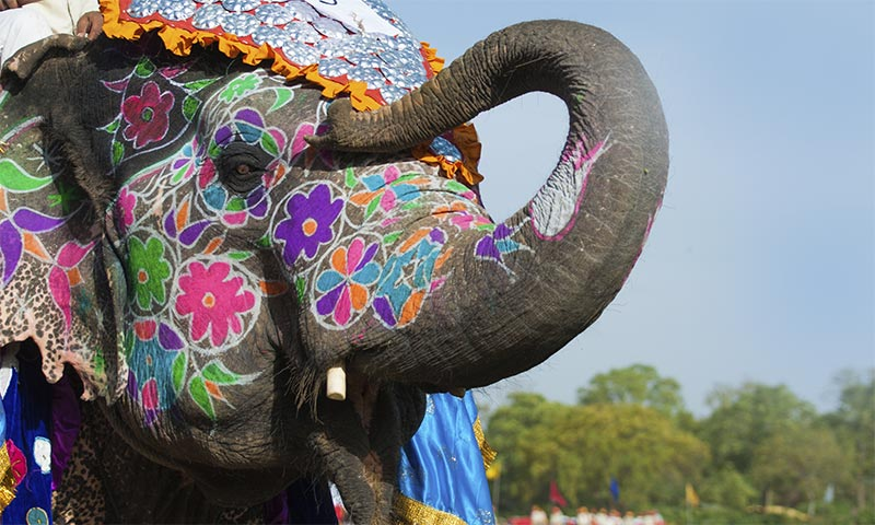 Most Popular Elephant Festival tour India