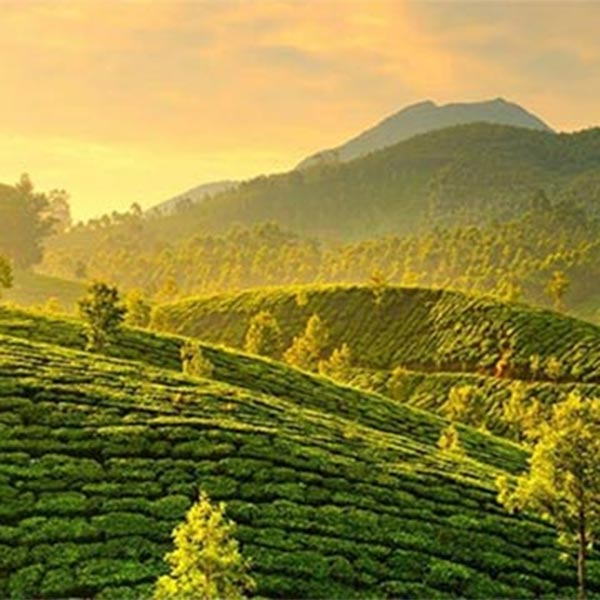 Kerala India Tour Package