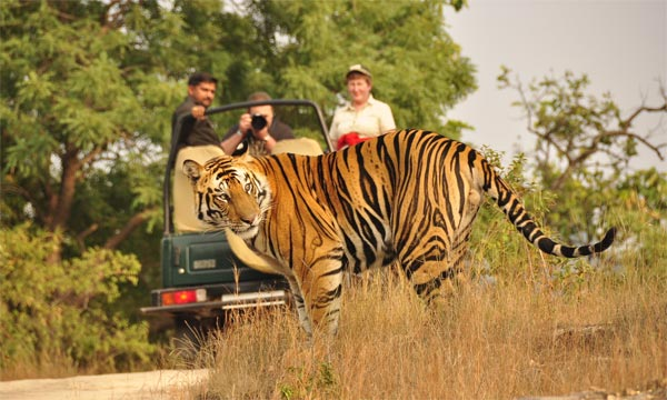 Jim Corbett Wildlife Tour from Delhi