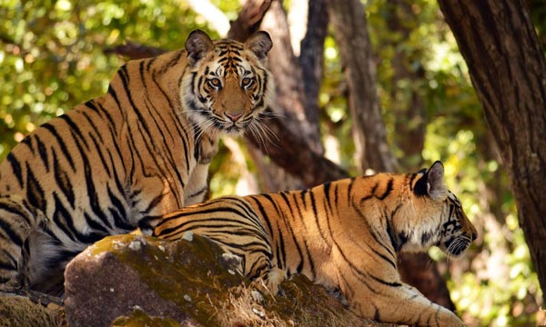 Nagarjunsagar srisailam tiger reserve
