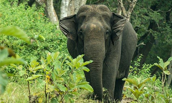 Palani hills wildlife sanctuary and national park