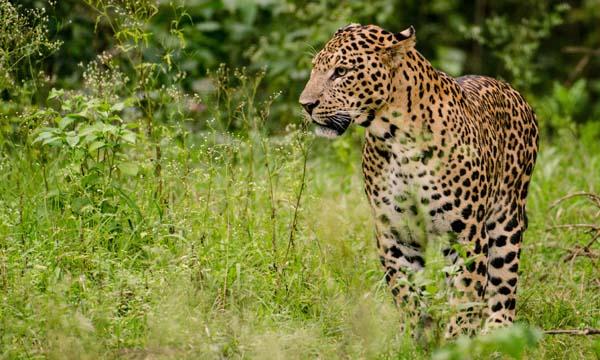Shoolpaneshwar Wildlife Sanctuary Gujarat