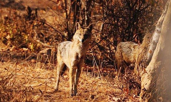 Sita Mata Wildlife Sanctuary Rajasthan