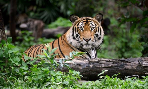 SundarbansWildlife Sanctuary West Bengal